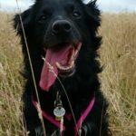 Dog Walking Services | Maidstone