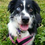 Poppy | Dog Walker in Maidstone