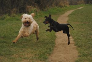 Dog park maidstone