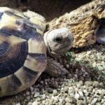 Tortoise sitter Maidstone