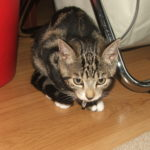 Madstone Cat Care