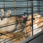 rabbit care maidstone