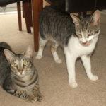 cats maidstone