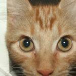 Cat Feeding Maidstone