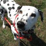 Dog Services Maidstone