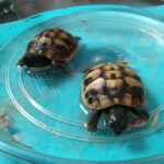 poppy and pals tortoise care