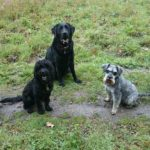 Maidstone Pet Care