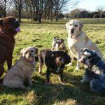 Maidstone dog walker