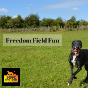 maidstone dog walking and doggy daycare field