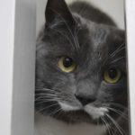 Cat Sitter Maidstone