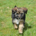 Puppy Maidstone