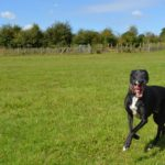 Dog daycare in Maidstone