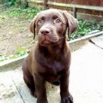 Puppy Sitter Maidstone