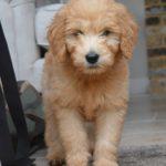 Dog Walker Barming