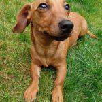 Dog Walker Maidstone