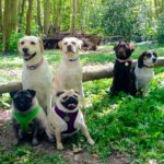 Professional Dog walkers Maidstone